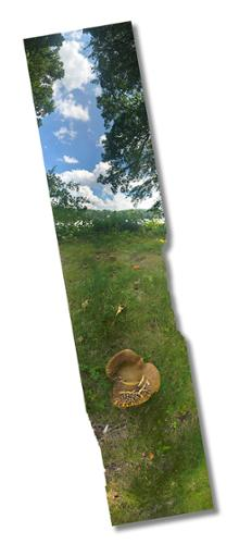 """Lake Shawnee Mushroom"".   Jean-Paul Picard. Digital Photograph on dibond. 9"" x 39"". $780 plus tax."